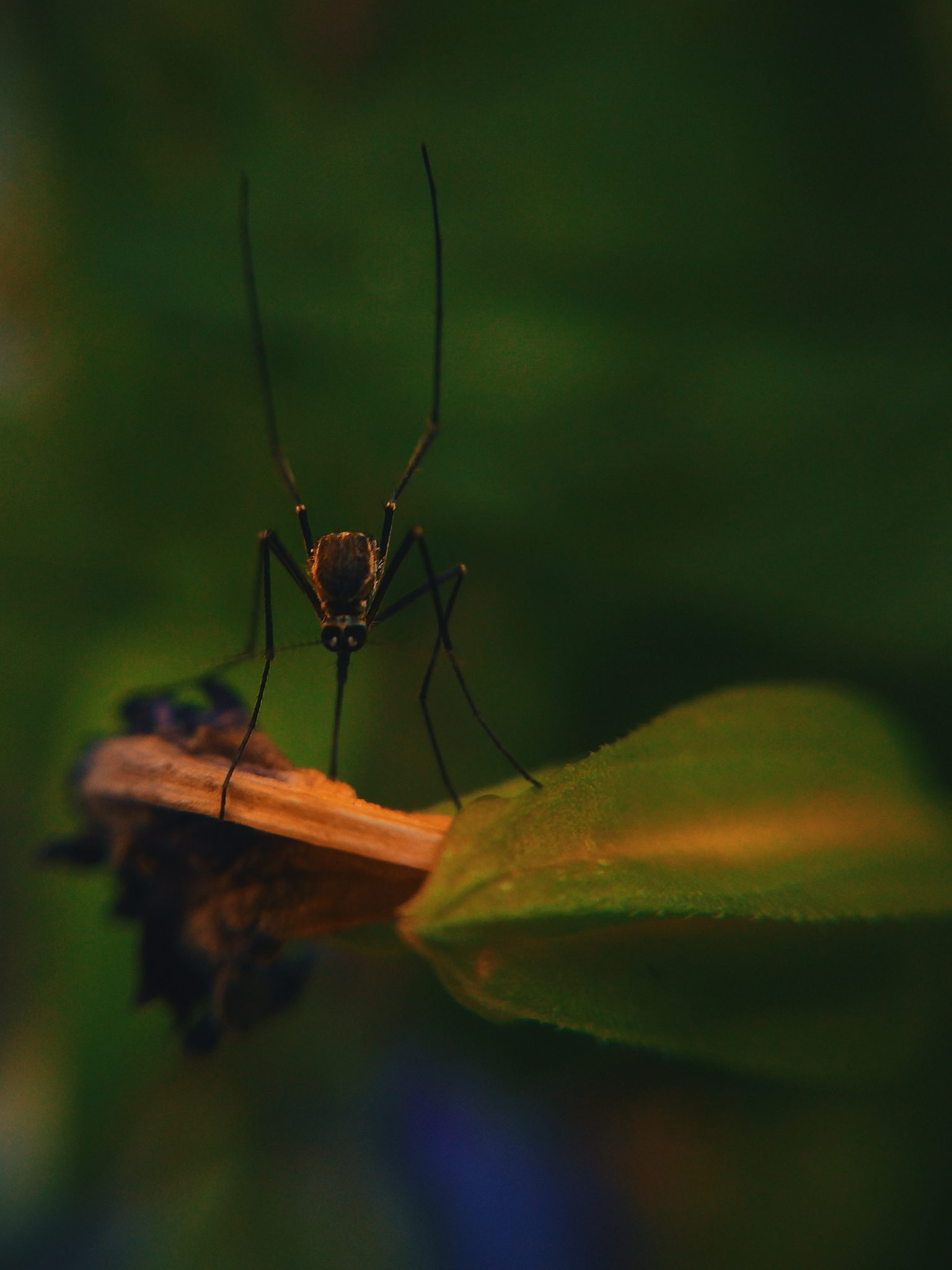 Mosquito Control Tips. Are Mosquitos Bites Dangerous?